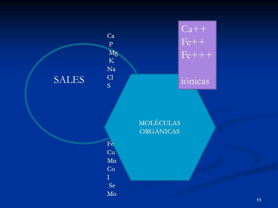 11 SALES MOLÉCULAS ORGÁNICAS Ca P Mg K Na Cl S Fe Cu Mn Co I Se Mo Ca++ Fe++ Fe+++ iónicas