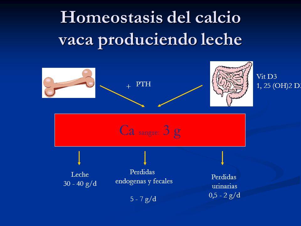 Homeostasis del calcio vaca produciendo leche Ca sangre: 3 g Lait 30 - 40 g/j Perdidas endogenas y fecales 5 - 7 g/d Perdidas urinarias 0,5 - 2 g/d Le