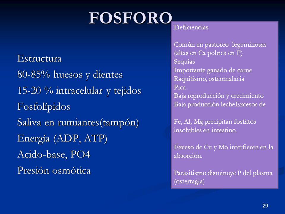 FOSFORO FOSFOROEstructura 80-85% huesos y dientes 15-20 % intracelular y tejidos Fosfolípidos Saliva en rumiantes(tampón) Energía (ADP, ATP) Acido-bas