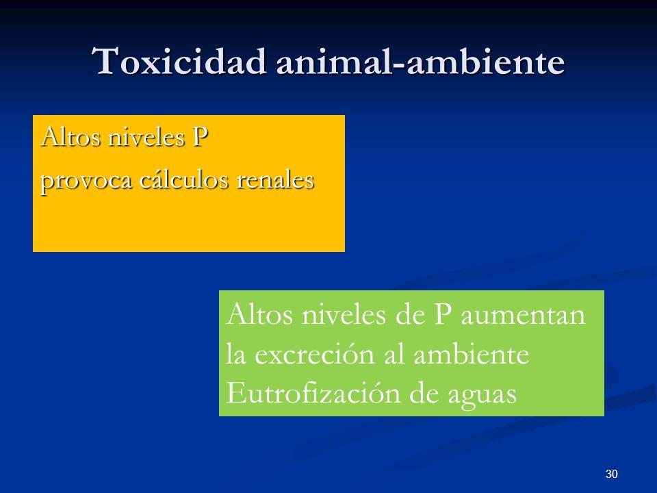 Toxicidad animal-ambiente Altos niveles P provoca cálculos renales 30 Altos niveles de P aumentan la excreción al ambiente Eutrofización de aguas