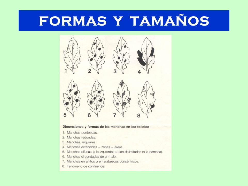 FORMAS Y TAMAÑOS