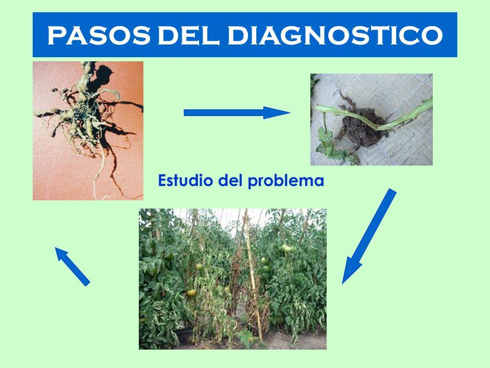 PASOS DEL DIAGNOSTICO Estudio del problema