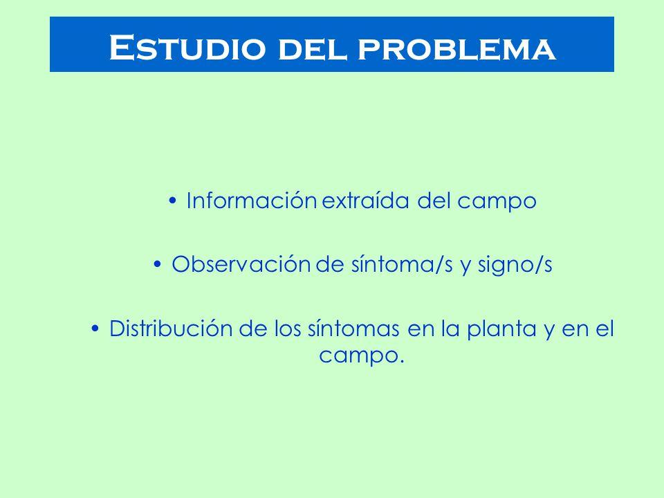 Información extraída del campo Observación de síntoma/s y signo/s Distribución de los síntomas en la planta y en el campo.