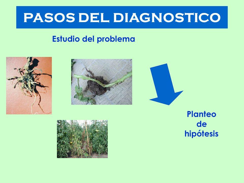 PASOS DEL DIAGNOSTICO Estudio del problema Planteo de hipótesis