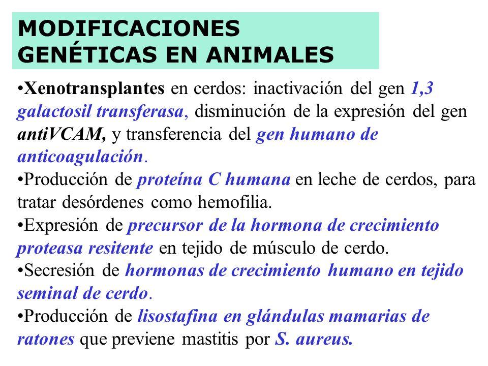 1. Agrobacterium. Uso de la bacteria Como