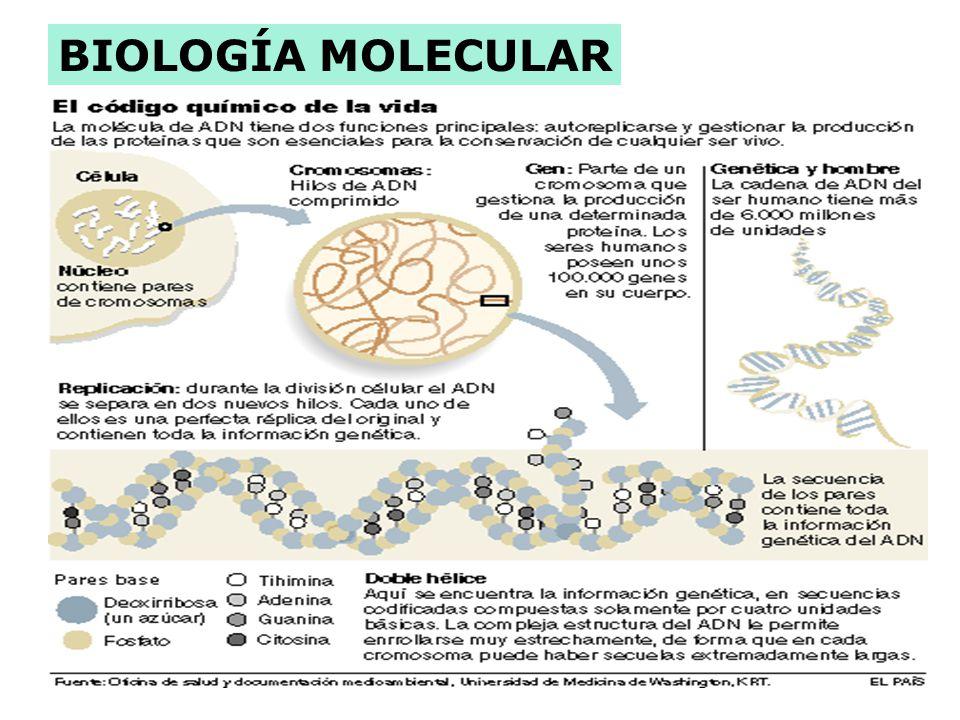 . Marcadores Ingeniería Genética Tecnología del ADN Fármacos Anti-cáncer Diagnósticos Cultivo de Células Vegetales Transferencia de genes en animales