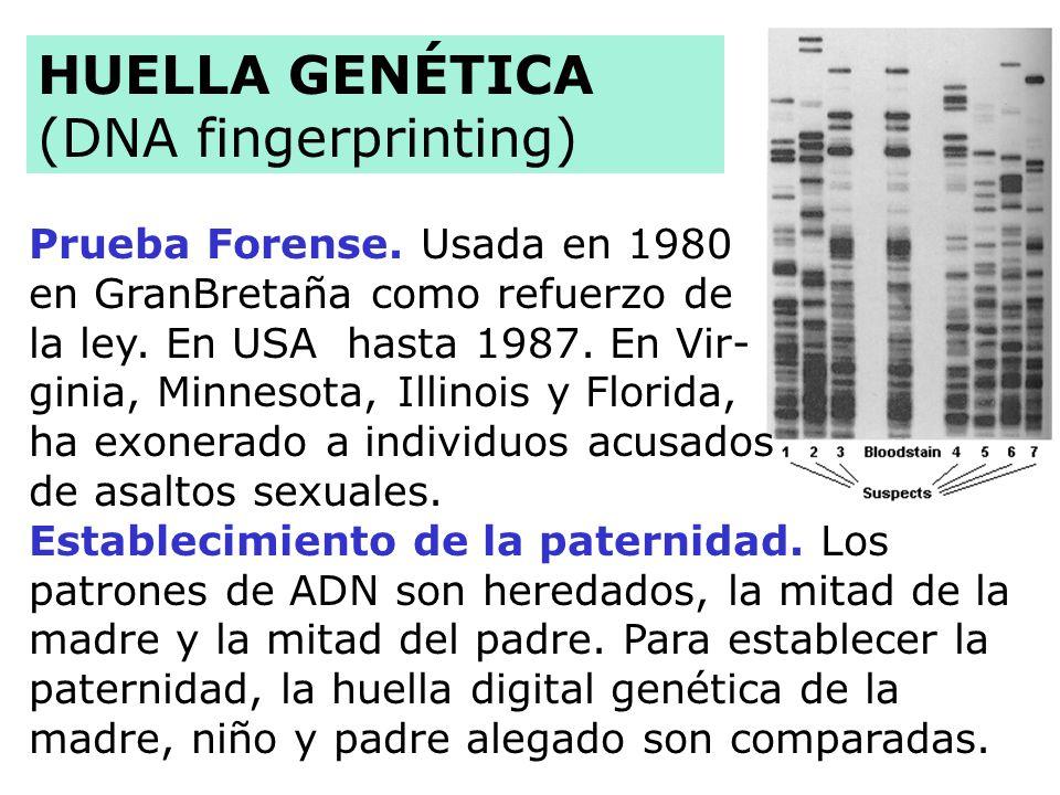 Prueba Forense.Usada en 1980 en GranBretaña como refuerzo de la ley.