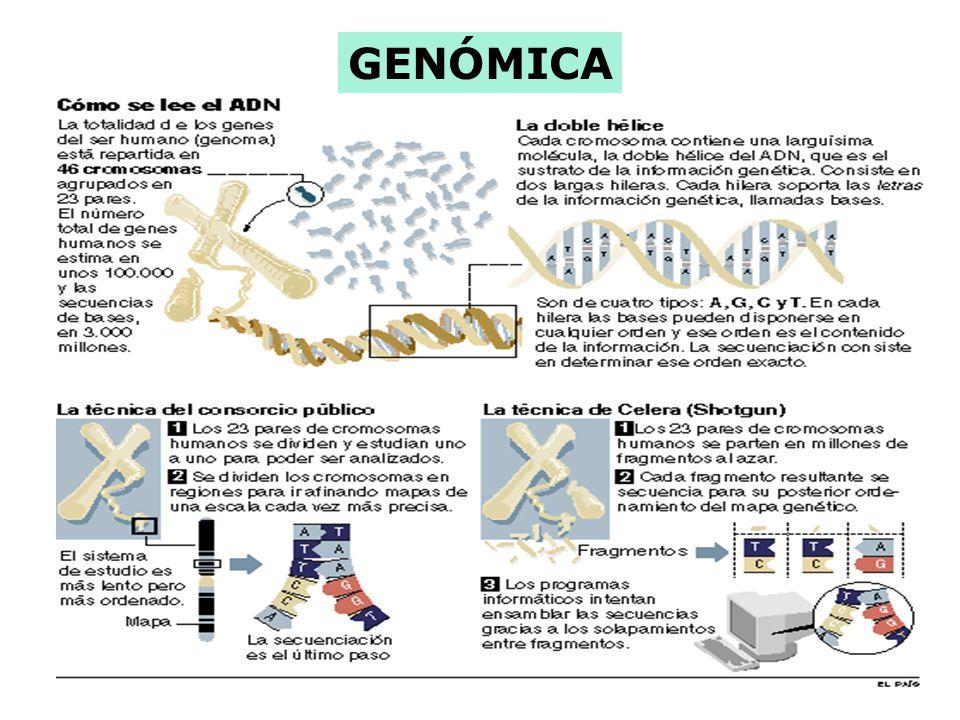 El Proyecto Genoma Humano se inició en 1990 previsto para el 2007, se terminó el 26 de Junio de 2000, con la secuenciación de todo el genoma humano de