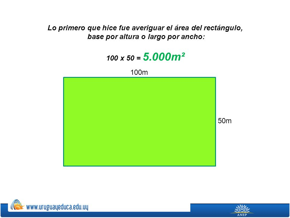100m 50m Lo primero que hice fue averiguar el área del rectángulo, base por altura o largo por ancho: 100 x 50 = 5.000m²
