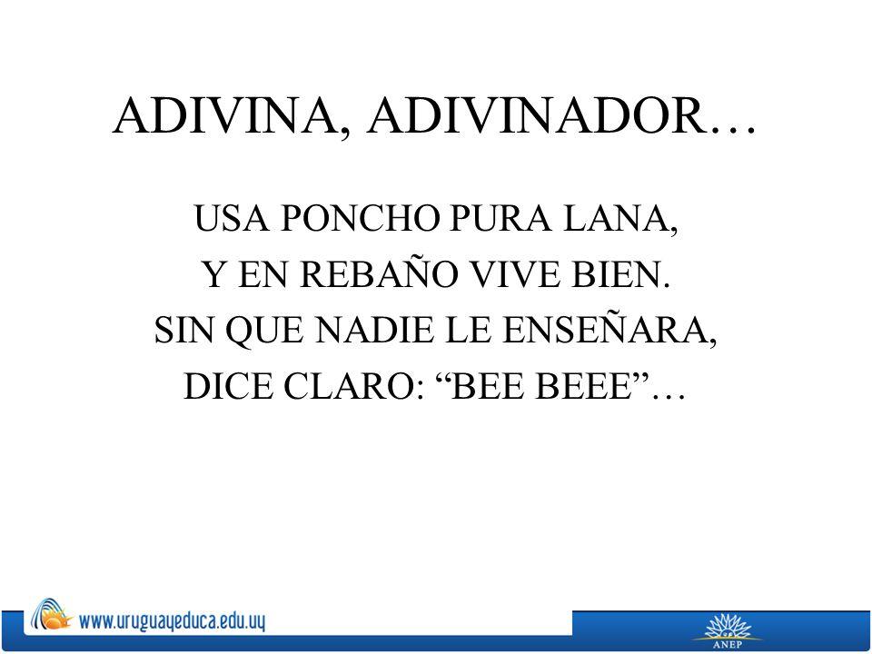 ADIVINA, ADIVINADOR… USA PONCHO PURA LANA, Y EN REBAÑO VIVE BIEN. SIN QUE NADIE LE ENSEÑARA, DICE CLARO: BEE BEEE…