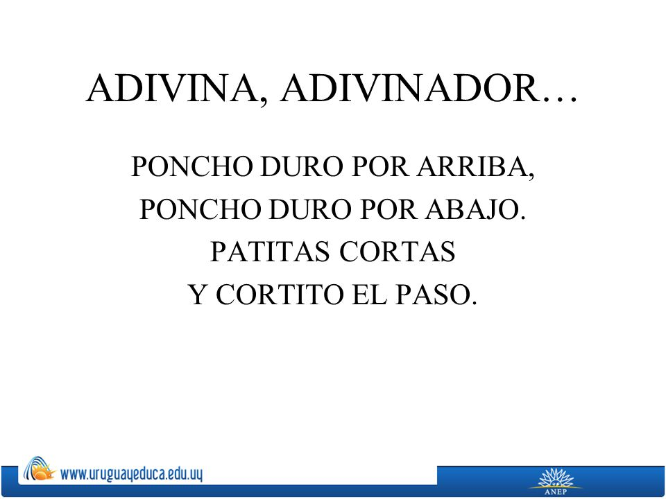 ADIVINA, ADIVINADOR… PONCHO DURO POR ARRIBA, PONCHO DURO POR ABAJO. PATITAS CORTAS Y CORTITO EL PASO.