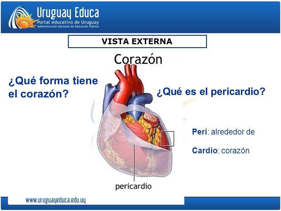 VISTA EXTERNA Peri: alrededor de Cardio: corazón ¿Qué es el pericardio? ¿Qué forma tiene el corazón?