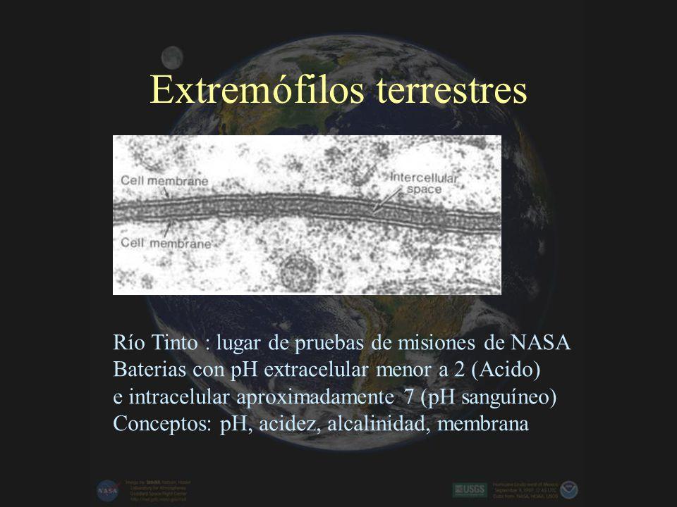 El origen de la vida en la Tierra Experimento de Miller (endógeno) Aportes externos (exógeno) Experimento de MillerNúcleo del Halley desde Giotto