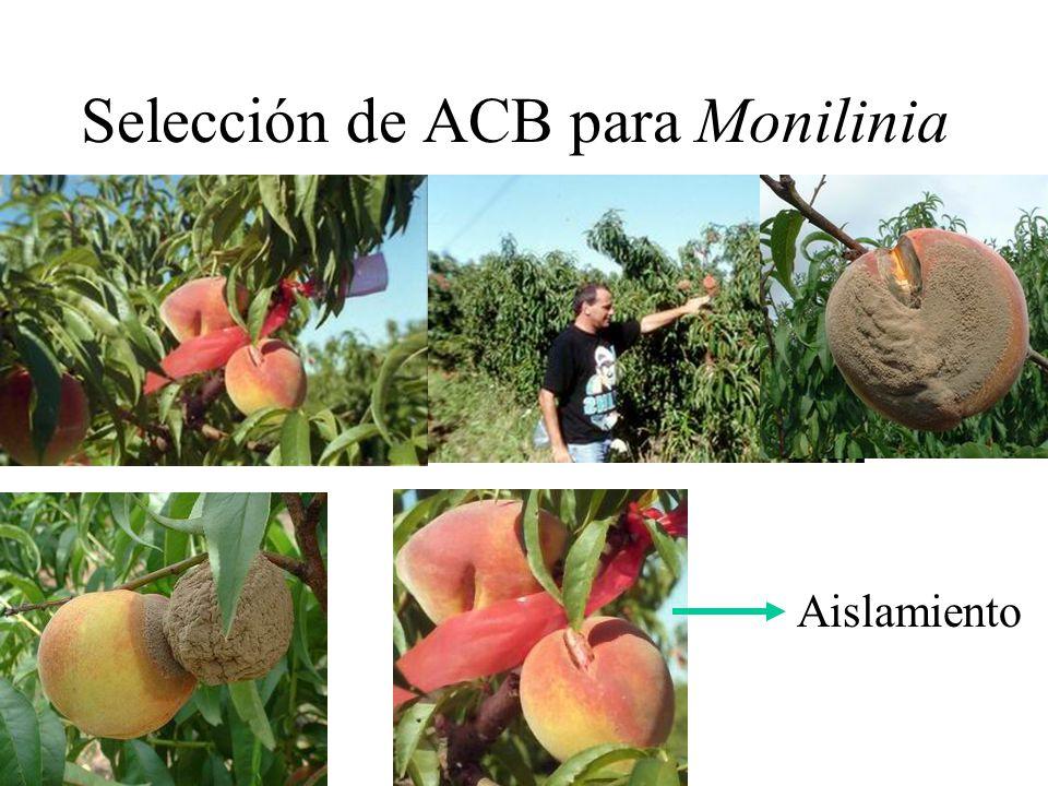 Selección de ACB para Monilinia Aislamiento