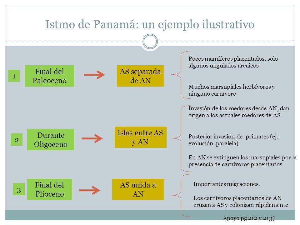 Istmo de Panamá: un ejemplo ilustrativo Final del Paleoceno 1 AS separada de AN Pocos mamíferos placentados, solo algunos ungulados arcaicos Muchos ma