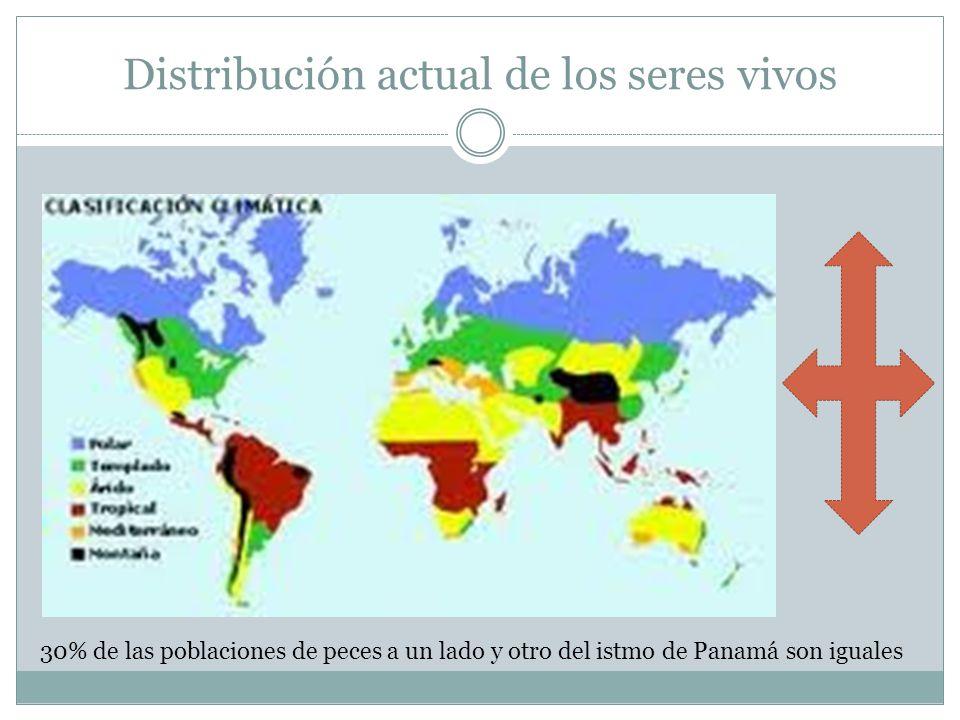 Distribución actual de los seres vivos 30% de las poblaciones de peces a un lado y otro del istmo de Panamá son iguales