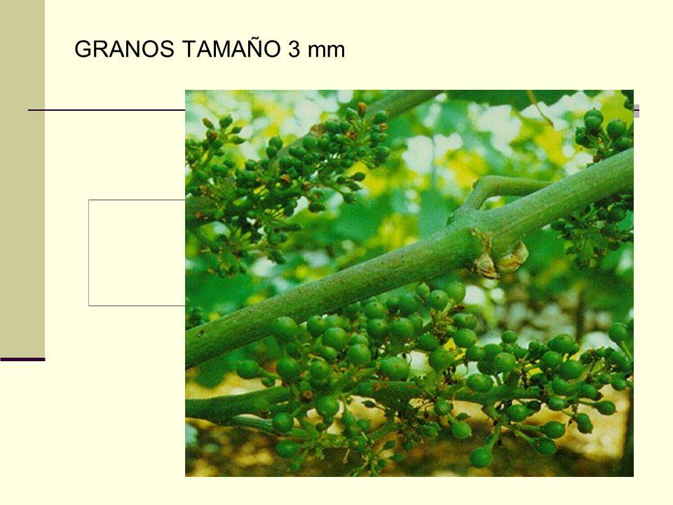 GRANOS TAMAÑO 3 mm