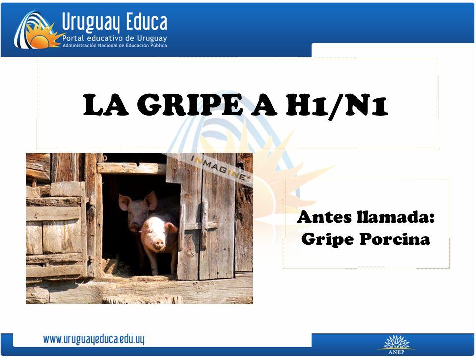 LA GRIPE A H1/N1 Antes llamada: Gripe Porcina