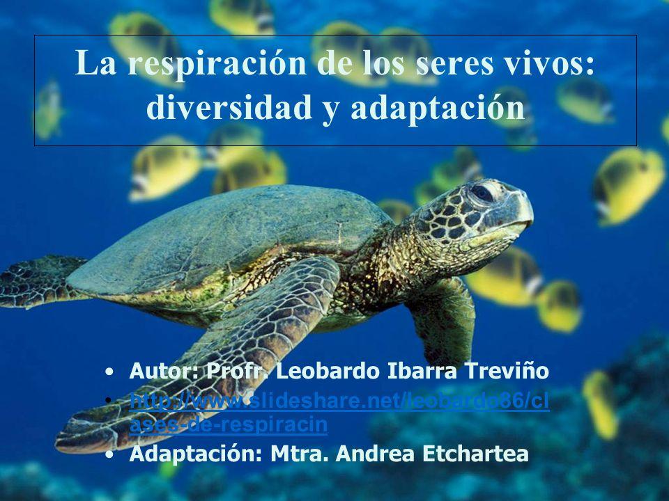 La respiración de los seres vivos: diversidad y adaptación Autor: Profr. Leobardo Ibarra Treviño http://www.slideshare.net/leobardo86/cl ases-de-respi