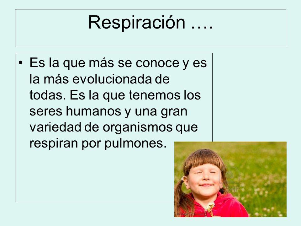 Respiración …. Es la que más se conoce y es la más evolucionada de todas. Es la que tenemos los seres humanos y una gran variedad de organismos que re