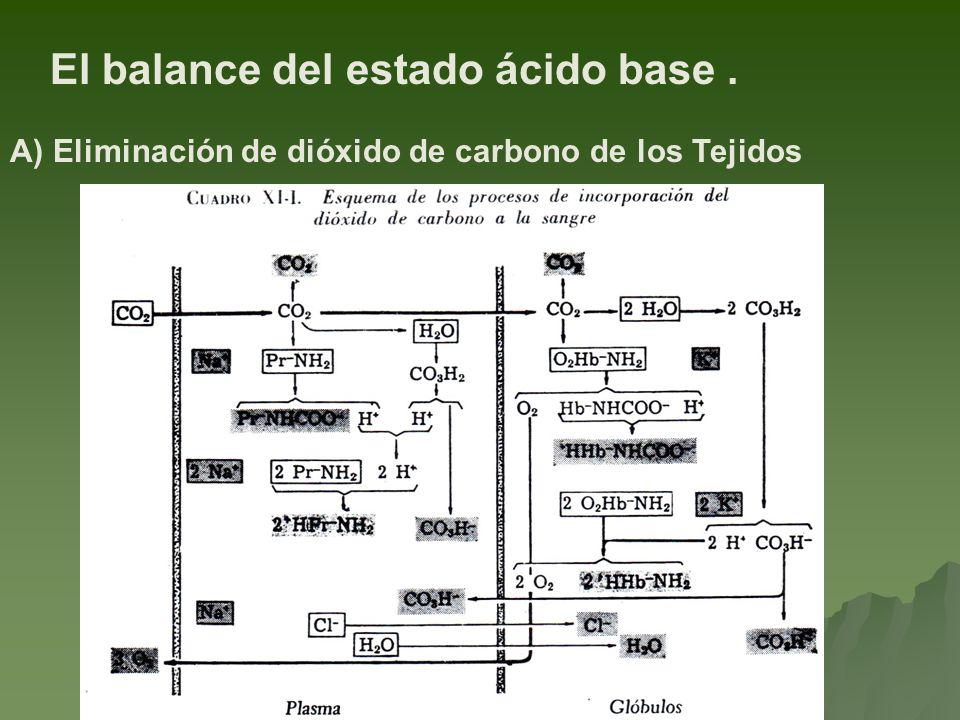 El balance del estado ácido base. A) Eliminación de dióxido de carbono de los Tejidos
