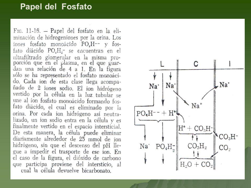 Papel del Fosfato