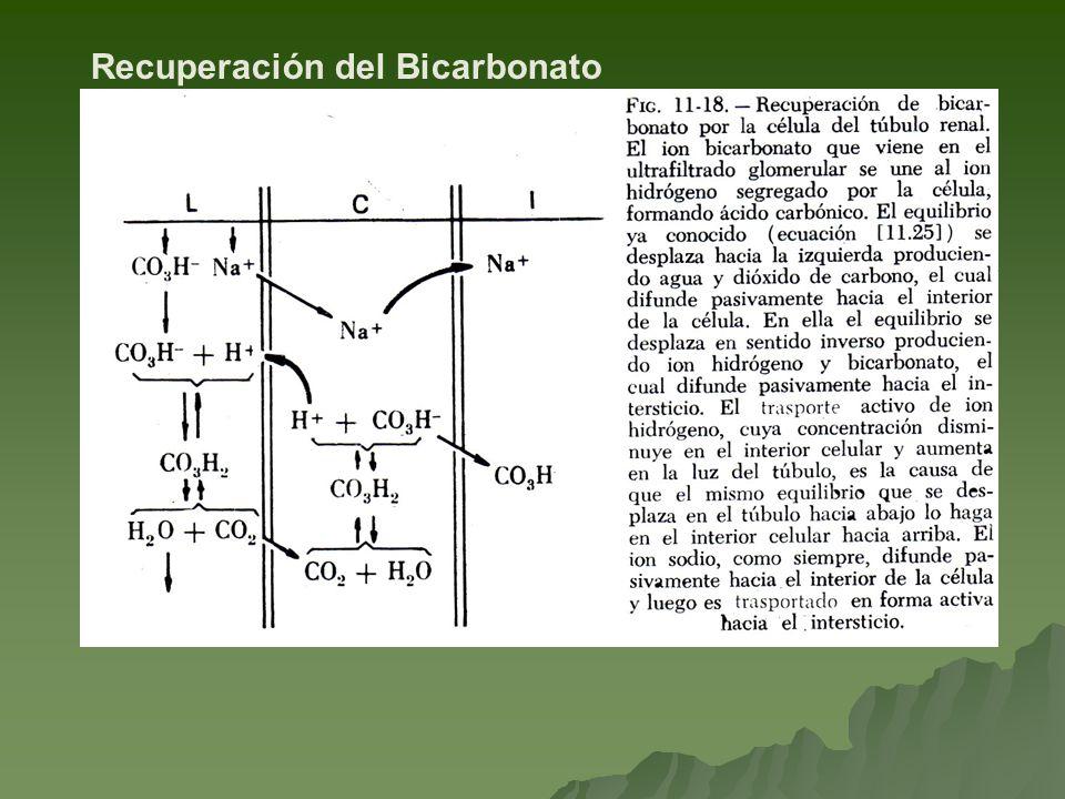 Recuperación del Bicarbonato