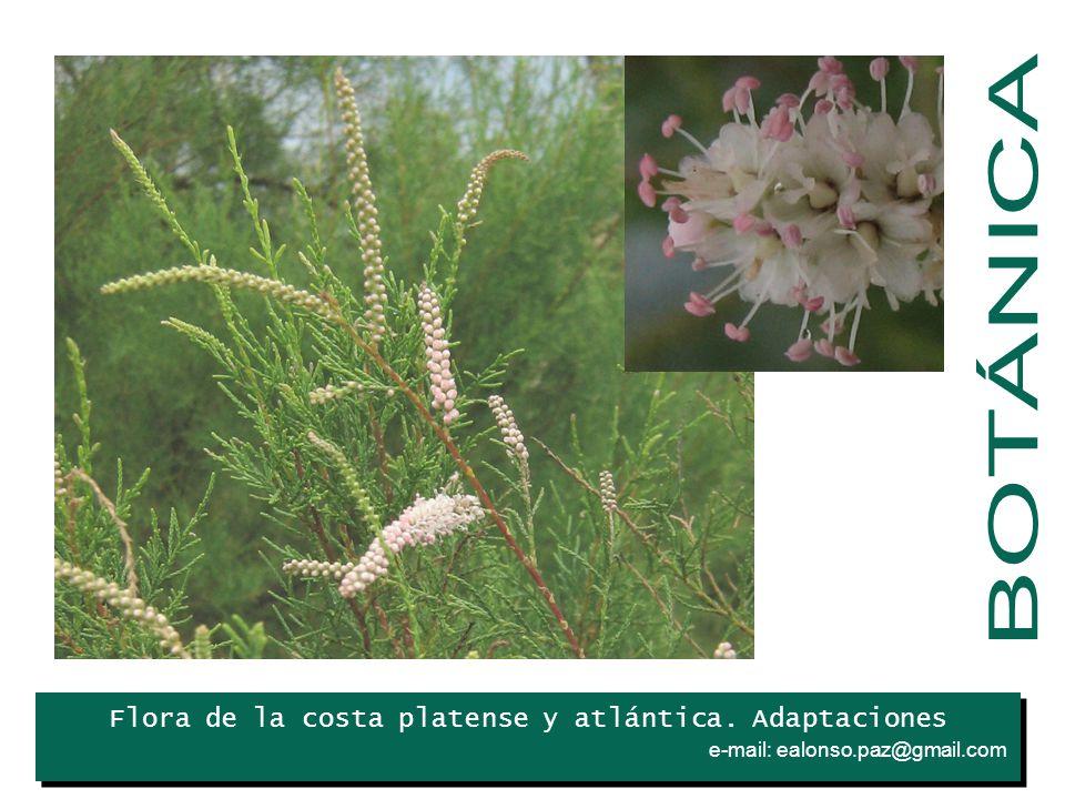 Flora de la costa platense y atlántica. Adaptaciones e-mail: ealonso.paz@gmail.com. Iris
