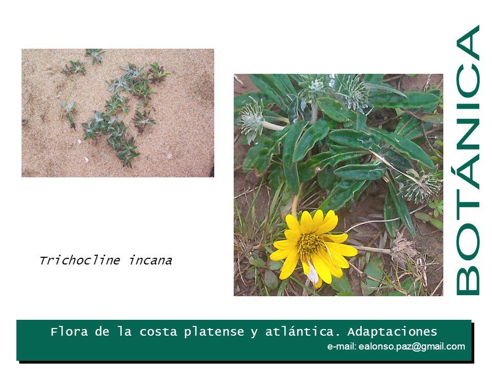Flora de la costa platense y atlántica.Adaptaciones e-mail: ealonso.paz@gmail.com.