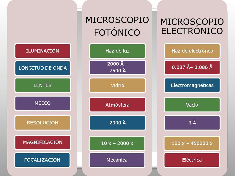 ILUMINACIÓNLONGITUD DE ONDALENTESMEDIORESOLUCIÓNMAGNIFICACIÓNFOCALIZACIÓN MICROSCOPIO FOTÓNICO Haz de luz 2000 Å – 7500 Å VidrioAtmósfera2000 Å10 x – 2000 xMecánica MICROSCOPIO ELECTRÓNICO Haz de electrones0.037 Å– 0.086 ÅElectromagnéticasVacío3 Å100 x – 450000 xEléctrica