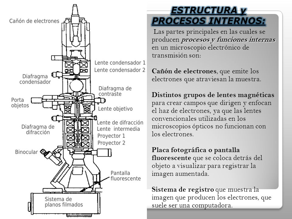 Las partes principales en las cuales se producen p pp procesos y funciones internas en un microscopio electrónico de transmisión son: Cañón de electrones, que emite los electrones que atraviesan la muestra.