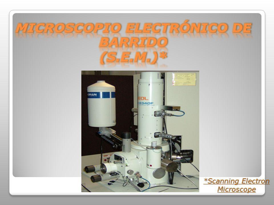 *Scanning Electron Microscope