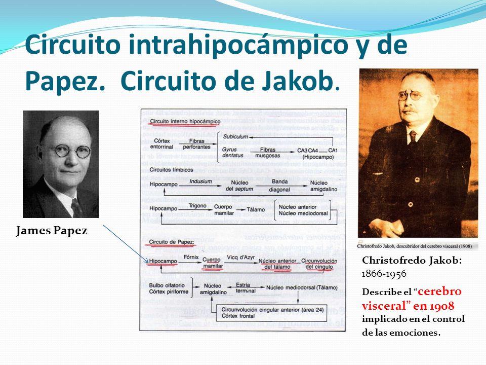 Circuito intrahipocámpico y de Papez. Circuito de Jakob. James Papez Christofredo Jakob: 1866-1956 Describe el cerebro visceral en 1908 implicado en e