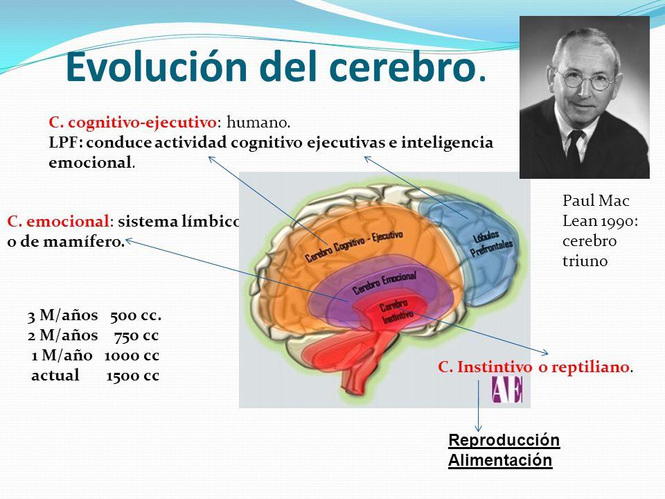 Evolución del cerebro. C. emocional: sistema límbico o de mamífero. C. Instintivo o reptiliano. C. cognitivo-ejecutivo: humano. LPF: conduce actividad