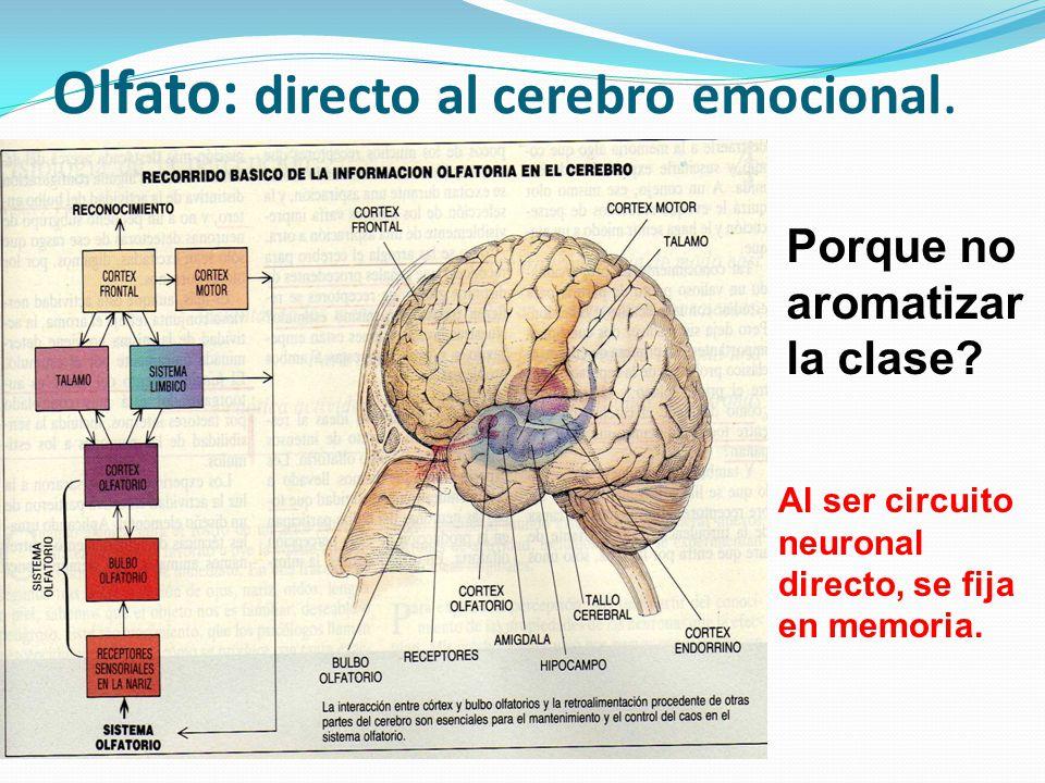 Olfato: directo al cerebro emocional. Porque no aromatizar la clase? Al ser circuito neuronal directo, se fija en memoria.