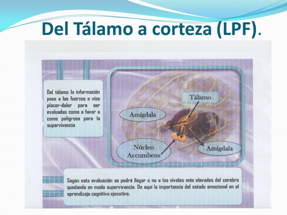 Del Tálamo a corteza (LPF).