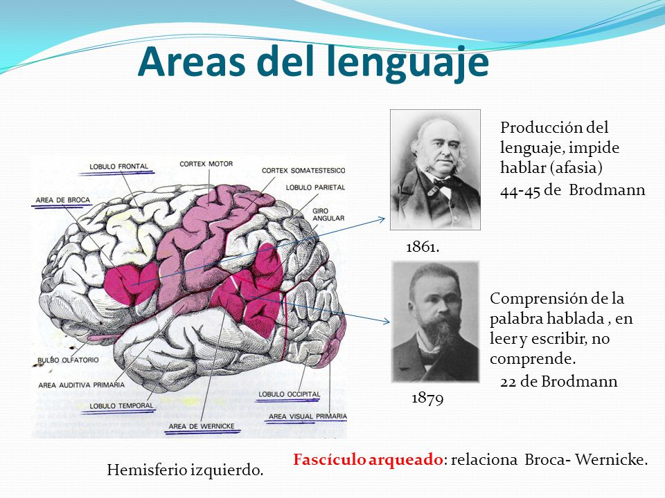 Areas del lenguaje Hemisferio izquierdo. 1861. 1879 Comprensión de la palabra hablada, en leer y escribir, no comprende. Fascículo arqueado: relaciona