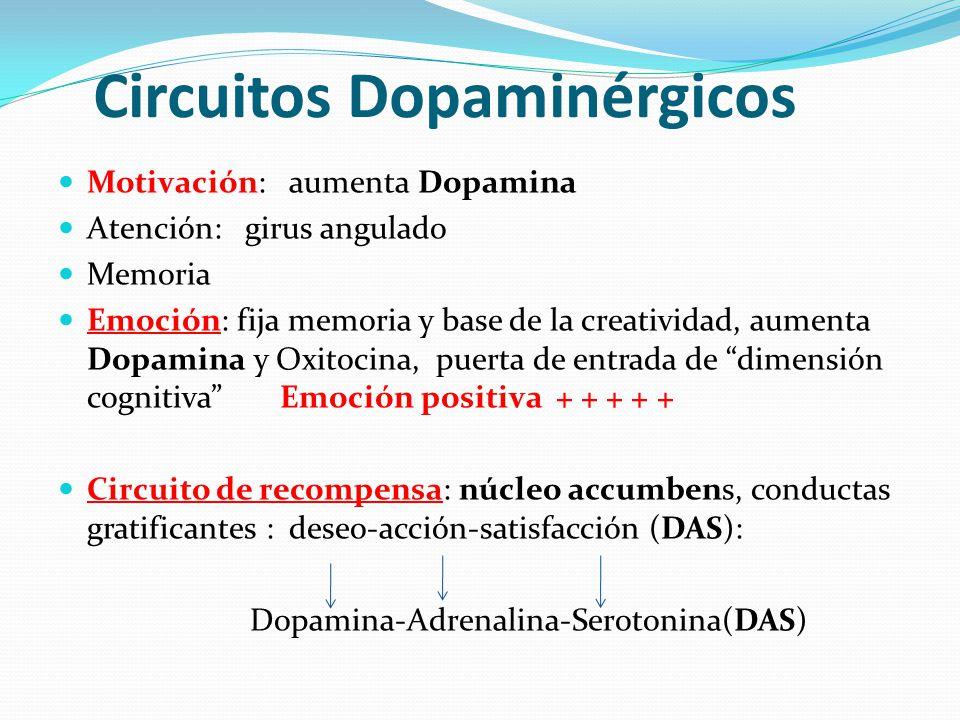 Circuitos Dopaminérgicos Motivación: aumenta Dopamina Atención: girus angulado Memoria Emoción: fija memoria y base de la creatividad, aumenta Dopamin