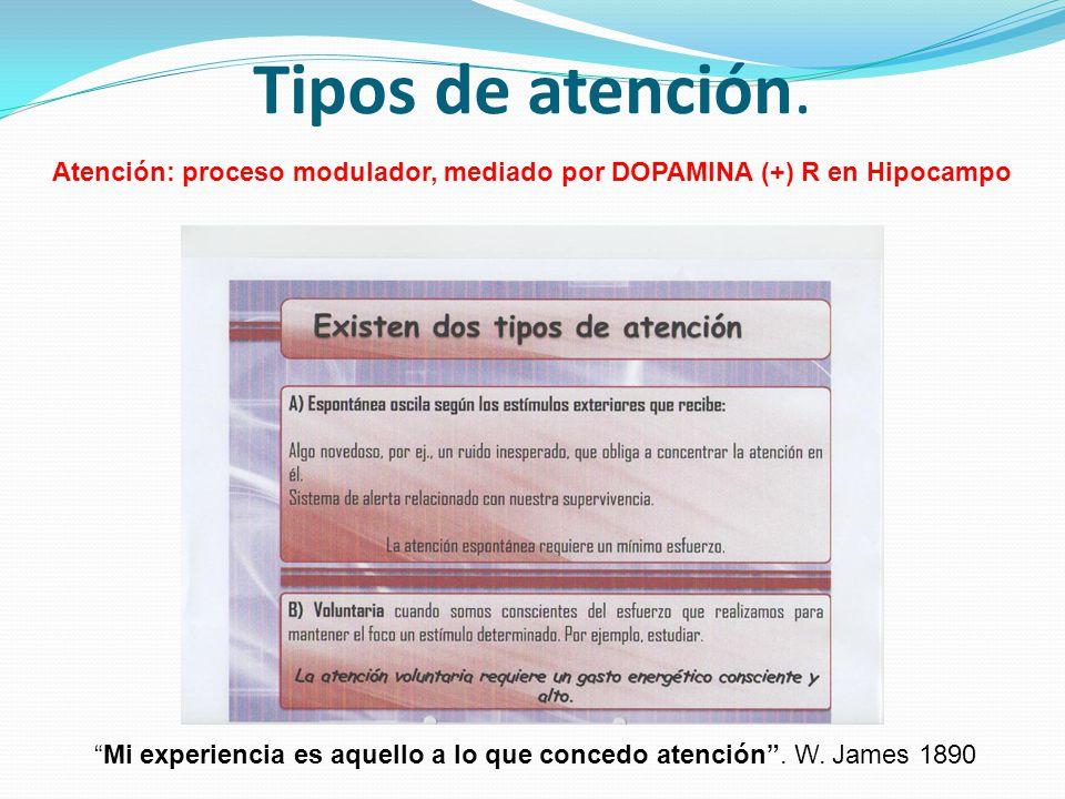 Tipos de atención. Atención: proceso modulador, mediado por DOPAMINA (+) R en Hipocampo Mi experiencia es aquello a lo que concedo atención. W. James