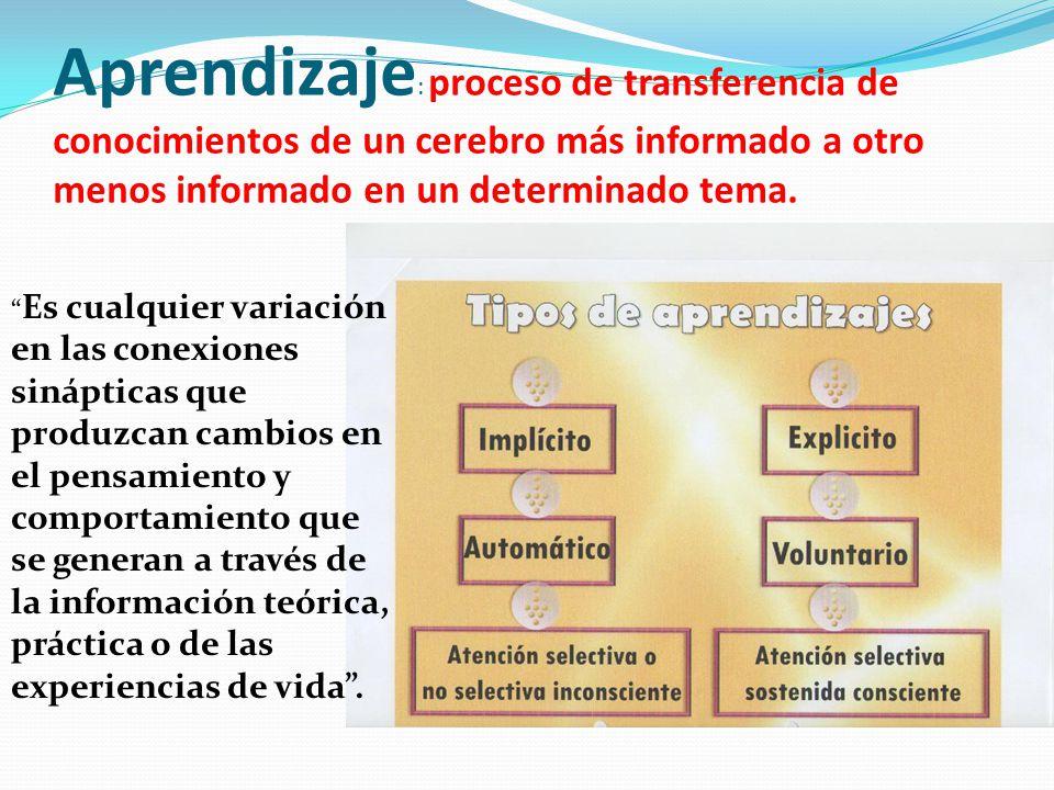Aprendizaje : proceso de transferencia de conocimientos de un cerebro más informado a otro menos informado en un determinado tema. Es cualquier variac