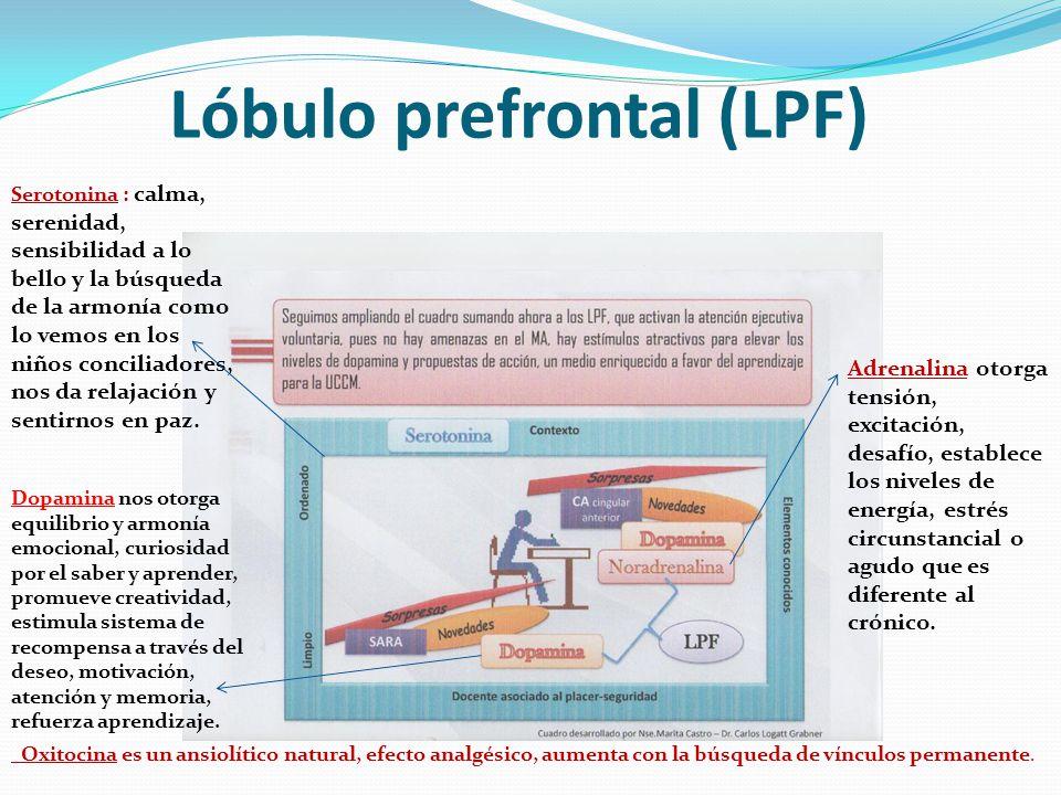 Lóbulo prefrontal (LPF) Serotonina : calma, serenidad, sensibilidad a lo bello y la búsqueda de la armonía como lo vemos en los niños conciliadores, n