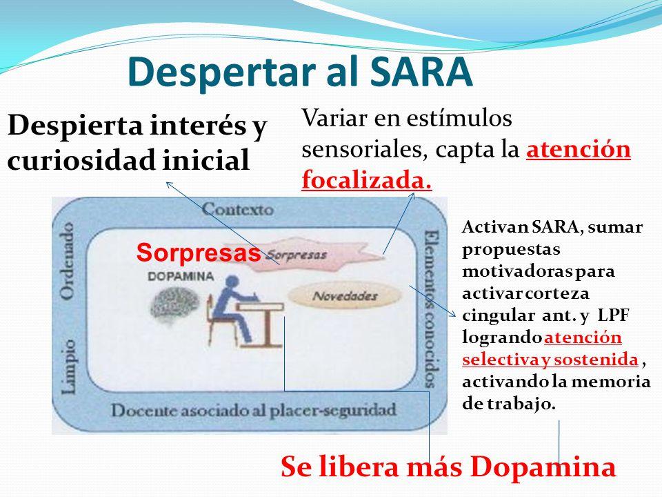 Despertar al SARA Variar en estímulos sensoriales, capta la atención focalizada. Despierta interés y curiosidad inicial Activan SARA, sumar propuestas