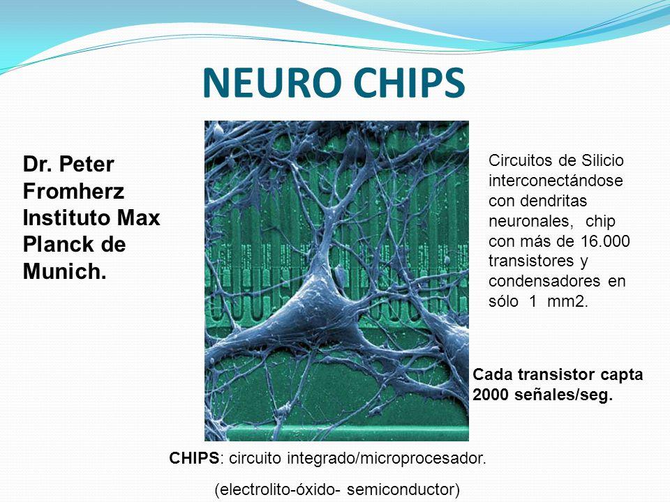 NEURO CHIPS Circuitos de Silicio interconectándose con dendritas neuronales, chip con más de 16.000 transistores y condensadores en sólo 1 mm2. CHIPS: