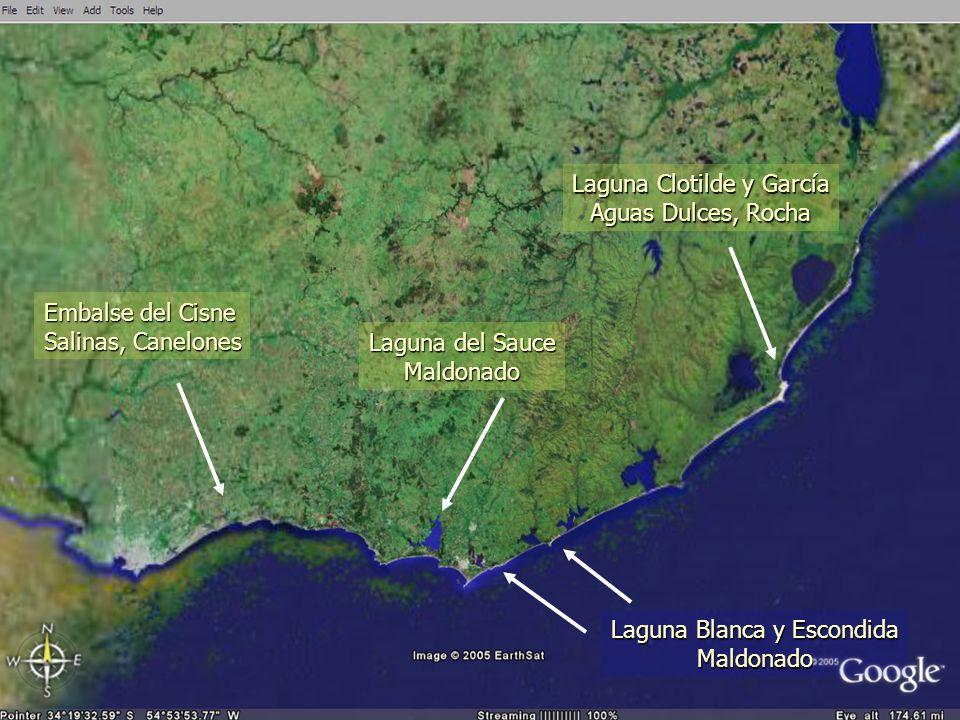 Embalse del Cisne Salinas, Canelones Laguna del Sauce Maldonado Laguna Blanca y Escondida Maldonado Laguna Clotilde y García Aguas Dulces, Rocha