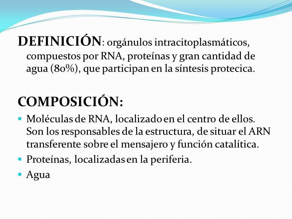 DEFINICIÓN : orgánulos intracitoplasmáticos, compuestos por RNA, proteínas y gran cantidad de agua (80%), que participan en la síntesis protecica.