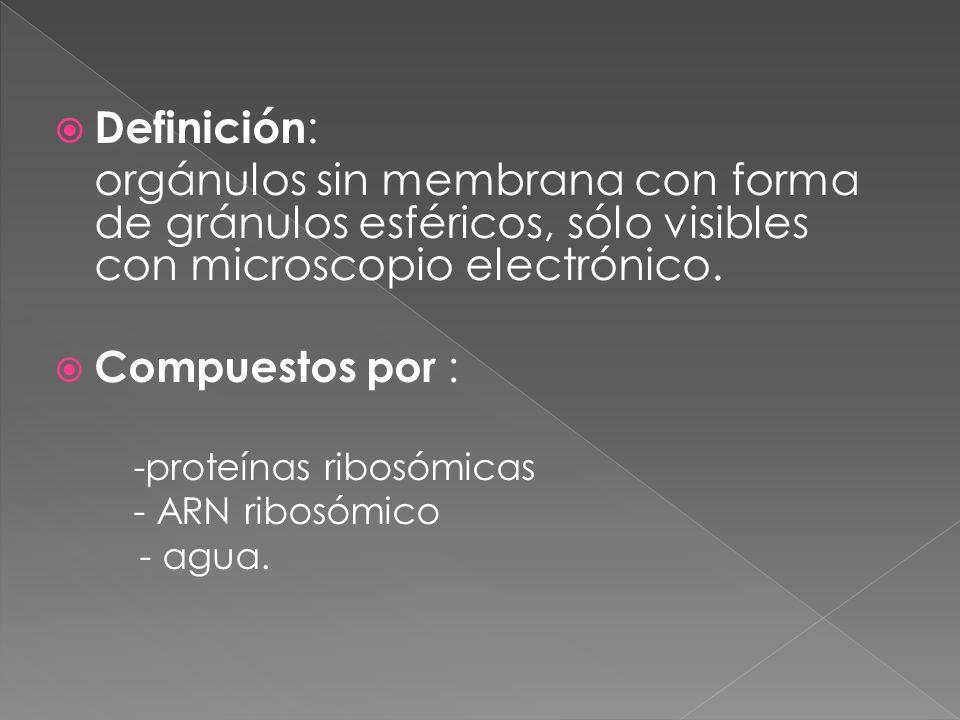 Definición : orgánulos sin membrana con forma de gránulos esféricos, sólo visibles con microscopio electrónico. Compuestos por : -proteínas ribosómica