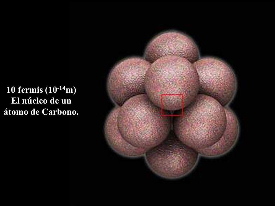 10 fermis (10 -14 m) El núcleo de un átomo de Carbono.