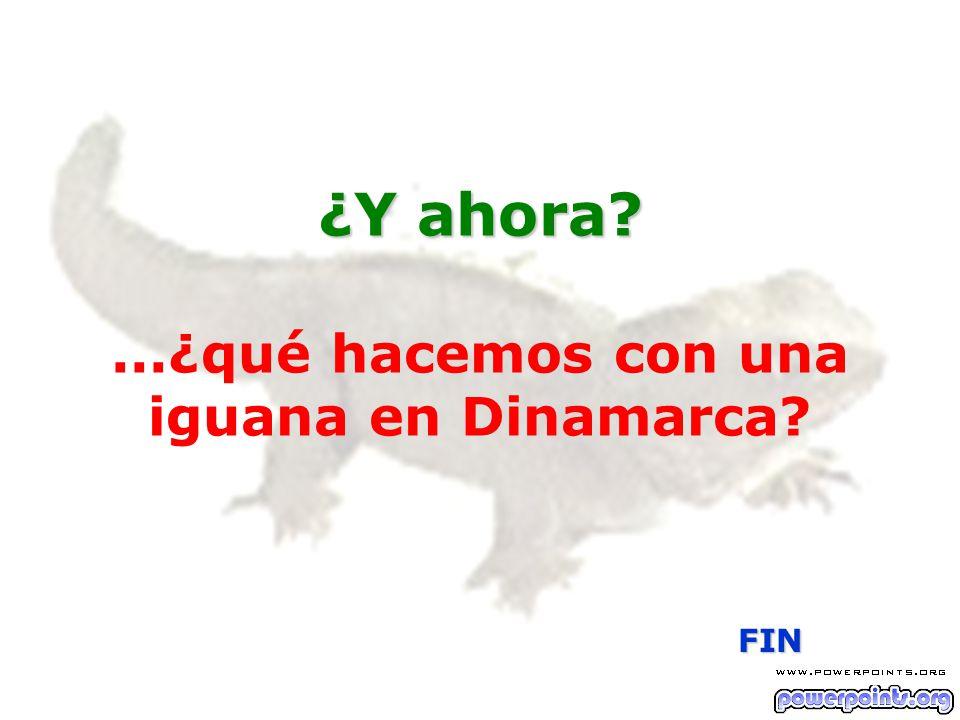 ¿Y ahora? ¿Y ahora?...¿qué hacemos con una iguana en Dinamarca? FIN