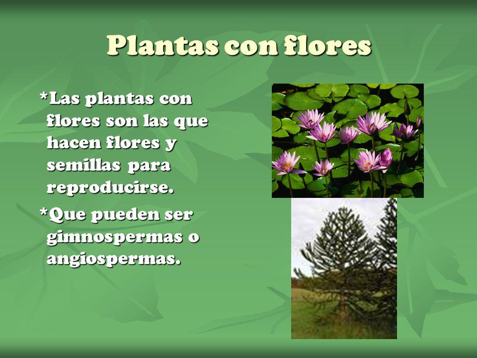 Plantas con flores *Las plantas con flores son las que hacen flores y semillas para reproducirse. *Que pueden ser gimnospermas o angiospermas.