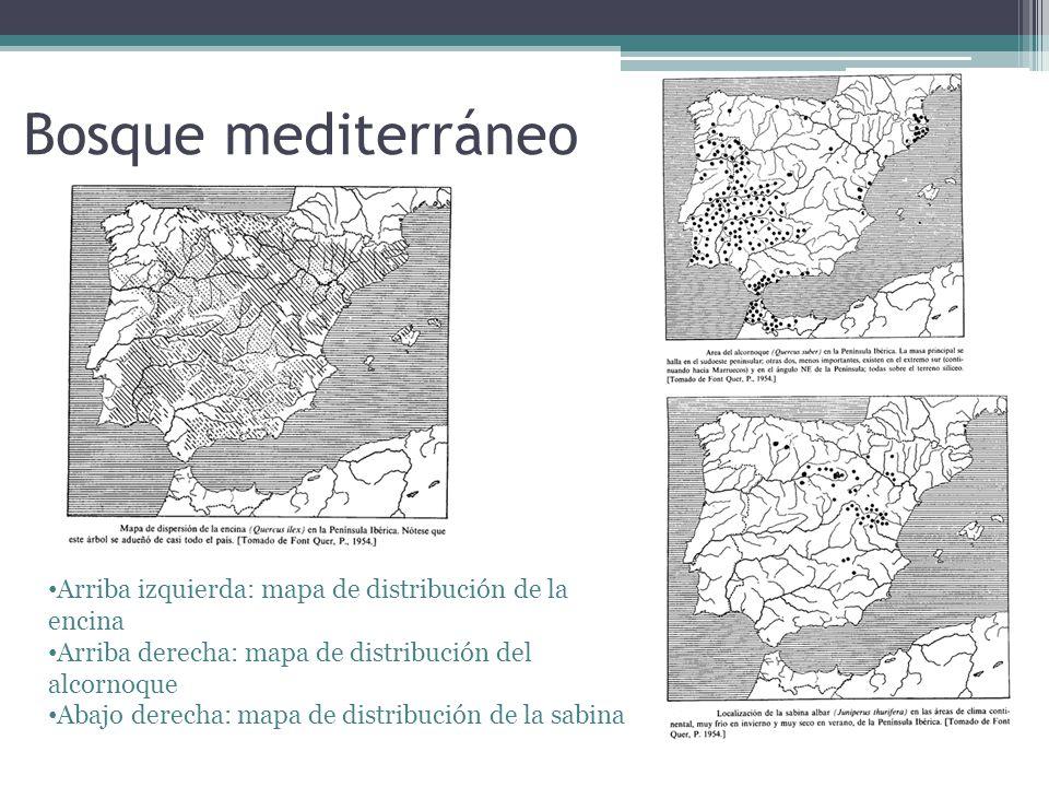 Arriba izquierda: mapa de distribución de la encina Arriba derecha: mapa de distribución del alcornoque Abajo derecha: mapa de distribución de la sabi